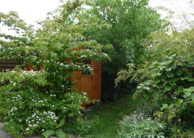 Cabanon de jardin masqué par le Cornus kousa